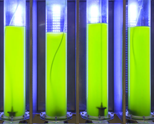 Nemalux offers wavelength specific engineering for biofuels and agriculture - algae growth, flax seed oil production, indoor flowering in greenhouse, vegetable growing