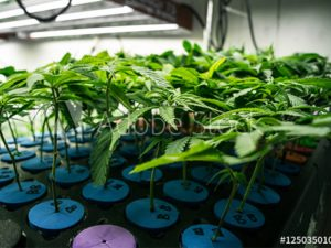 Horticultural Lighting for the Indoor Farming Industry
